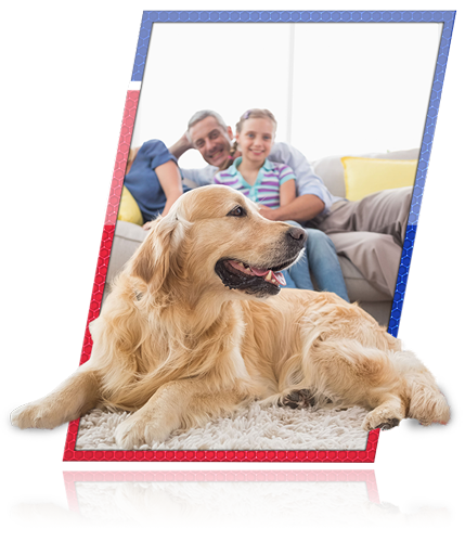 Pet stain carpet cleaner charlotte nc